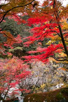 autumn01mini.jpg